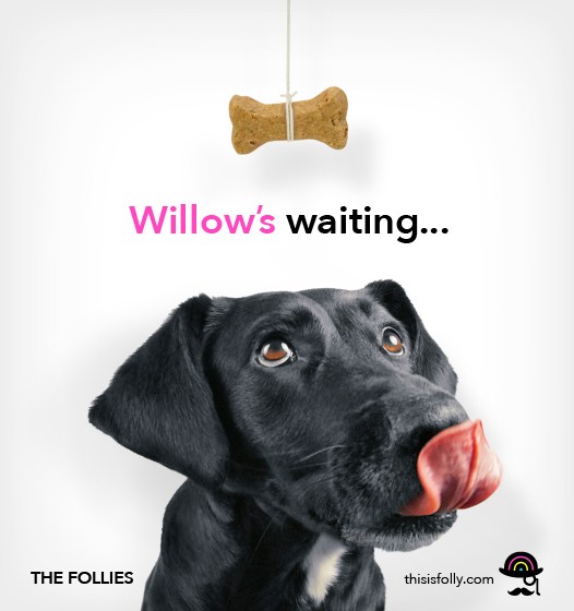 Willow is wating